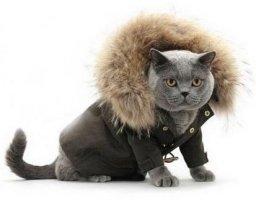 Ателье вязаная одежда для животных - smolensk-svadba.ru