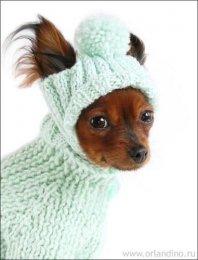 Более 10 лучших идей на тему «Костюмы для собак» на Pinterest