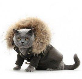 Кошачья одежда