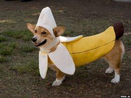 Костюмы для собак (14 фото) | Прикол.ру — приколы, картинки, фотки