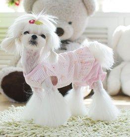 Купить товары для собак в бутике, интернет-магазин товаров для