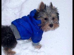 лимарджи одежда для собак купить - YouTube