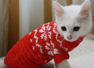 Одежда для котят