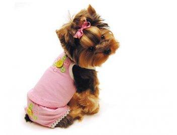 Одежда для маленьких собачек | Работа в интернете