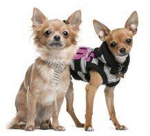 Одежда для собак (Люберцы, Выхино, Жулебино,Некрасовке). Купить
