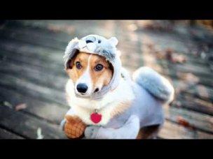 одежда для собак пермь где купить - YouTube