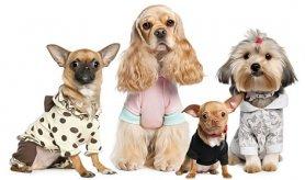 Одежда и аксессуары для собак со скидкой! (Скидка50%)