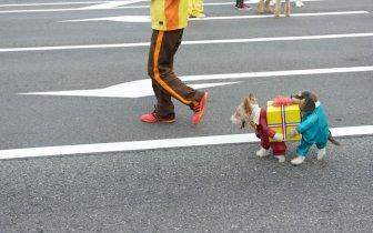 Самый крутой костюм для собаки | Смех — Дом смеха