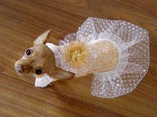 Шьем платье для собаки своими руками - выкройка — Интернет-магазин