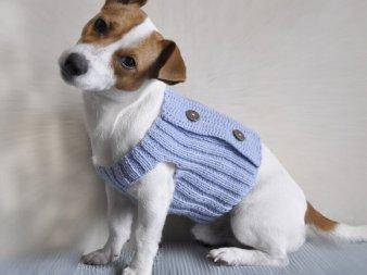 Вязаная одежда для собак своими руками (крючком или спицами