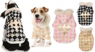 Зачем собакам модная одежда? Назначение одежды для собак - NameWoman