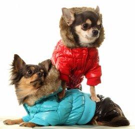 Заказать одежду для собак